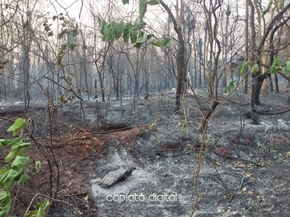 Bomberos siguen lucha contra incendio en Cerro Koi
